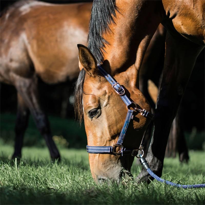 501310-2-goleygo-v2-halster-voor-paarden-en-ponys-blauw-karamel-met-adapterpen.jpg