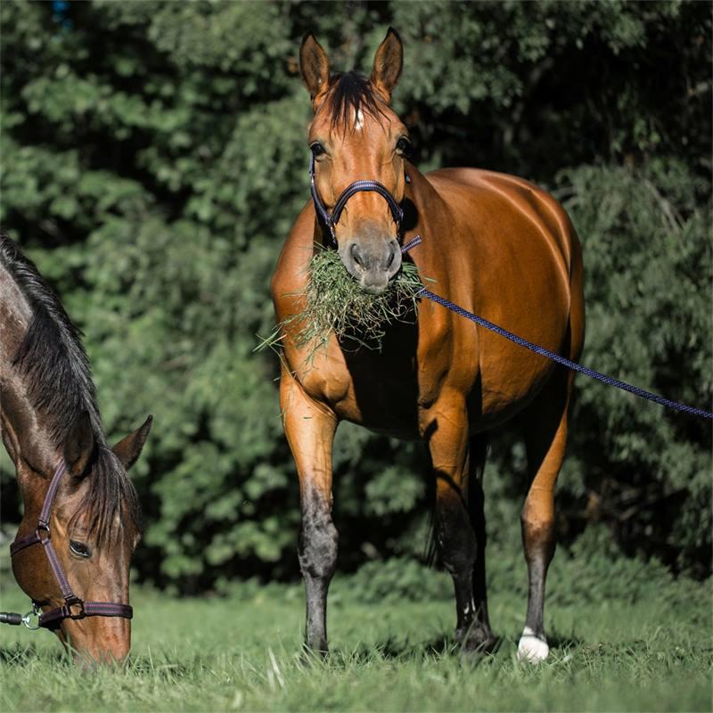 501310-6-goleygo-v2-halster-voor-paarden-en-ponys-blauw-karamel-met-adapterpen.jpg