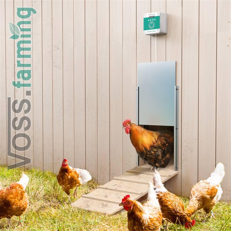 561855-voss-farming-automatisch-chickendoor-10.jpg
