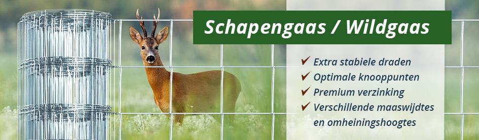 Schapengaas / wildgaas