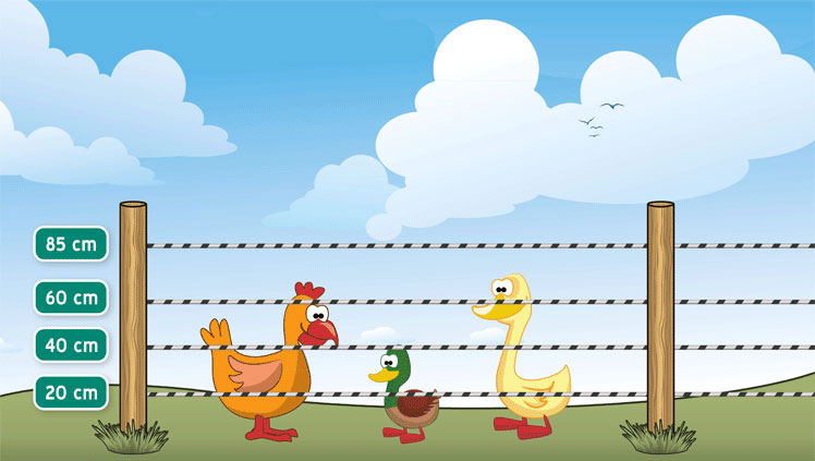 guide-poultry-fence.jpg