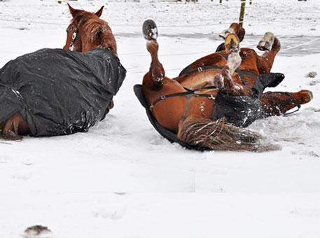 Paardendeckens