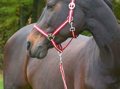 Paarden-halters-koord